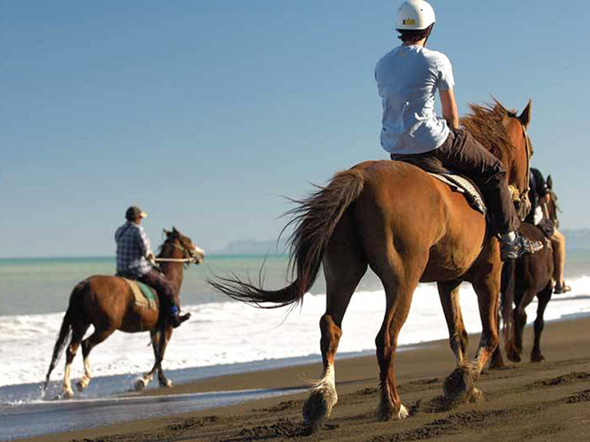 Horse riding on Muriwai Beach Auckland