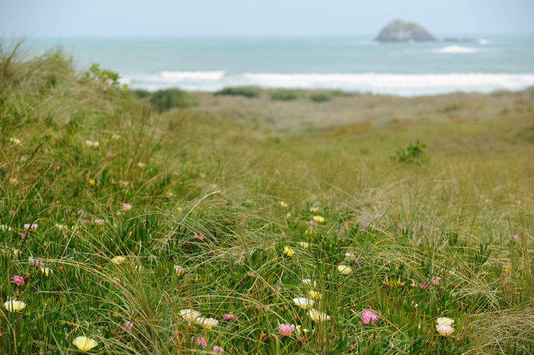 Muriwai scenic walks along Auckland's West Coast